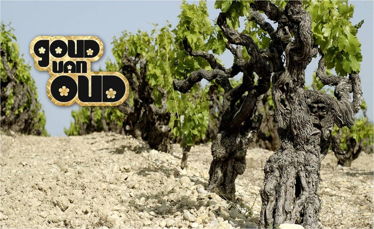 Bejaarde wijnstokken