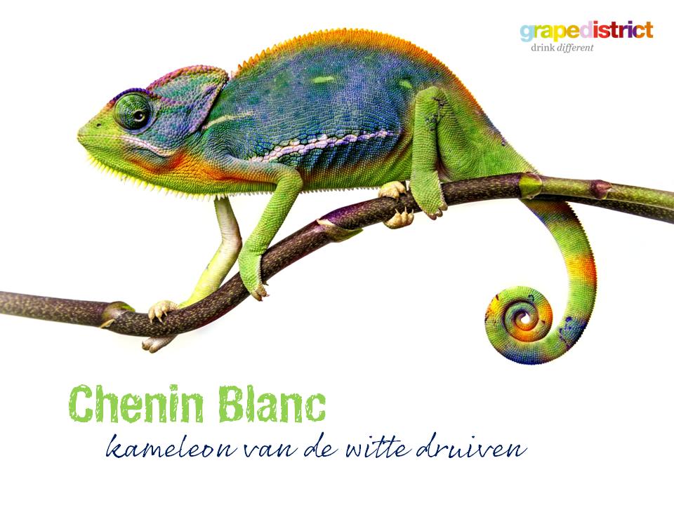 Ontdek de druif: Chenin Blanc