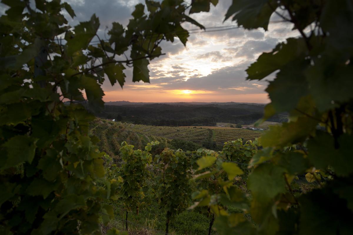 De oogst van 2017: zo doen ze dat in Slovenië