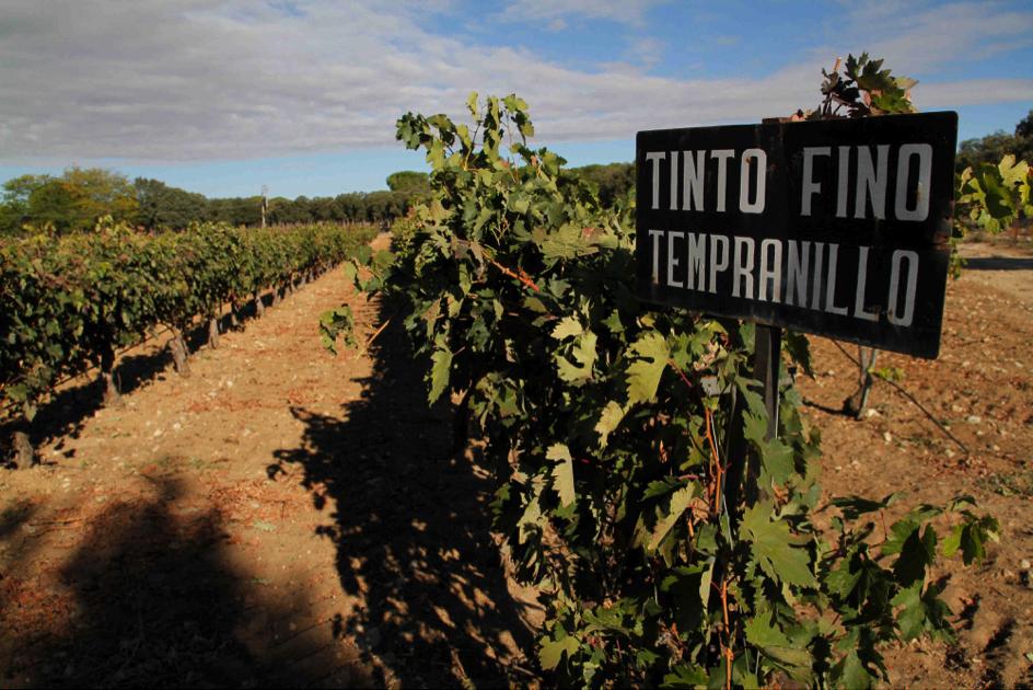 Ribera del Duero, de trots van Spanje