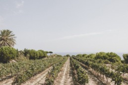 Grapedistrict-Alta-Alella-Banner